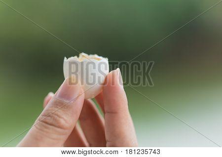 Small Animal Egg Shall Hatching Crack On Hand.