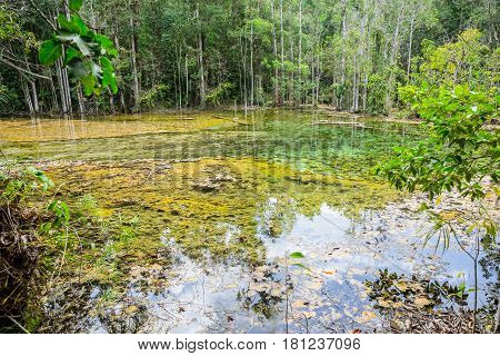 Wet Forest With Floating Of Water Nature Lake Swamp At Emerald Pool Travel Location Of Krabi Thailan