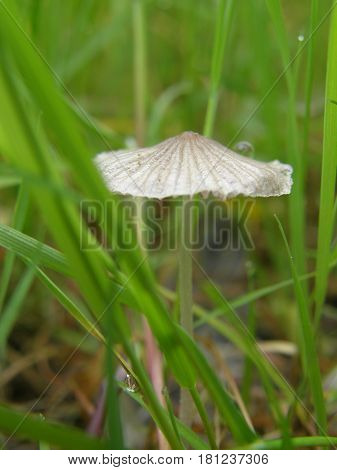 Pale toadstool in forest on a cloudy day