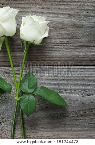 Two elegant white roses on a long stem with green leaves on old wooden background