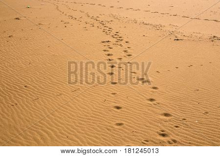 Dog or cat or another animal footprints in the sand