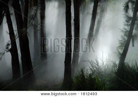 Foresta Haze