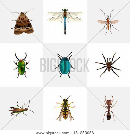 Realistic Damselfly, Butterfly, Bug And Other Vector Elements. Set Of Bug Realistic Symbols Also Includes Blue, Bug, Arachnid Objects.
