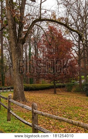 The wooden fence and the autumn tree in the Lullwater Park Atlanta USA