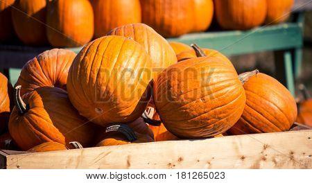 Fresh pumpkins at a farmer's market in Nova Scotia