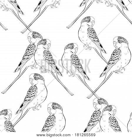 Seamless Pattern Coloring With Cute Wavy Parrot  Vector Illustration