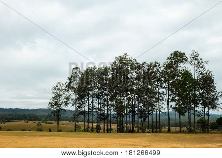 Thung Salaeng Luang National Park Forest And Savanna In Thailand