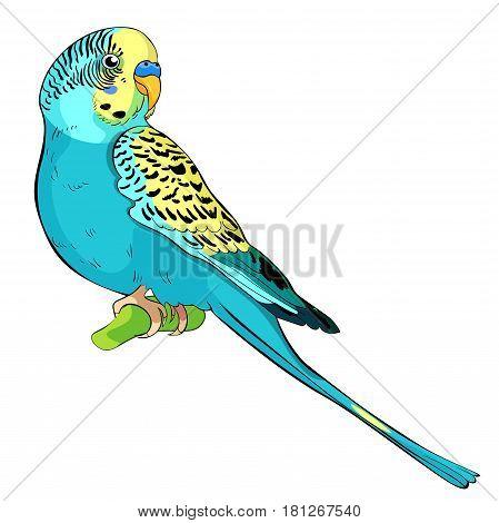 Yellow Face Blue Wavy Parrot. Vector Illustration