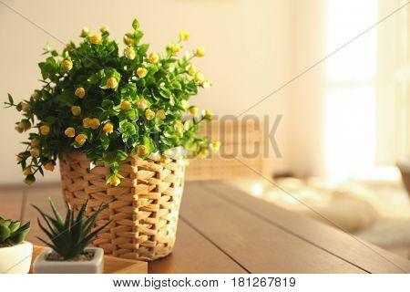 Beautiful houseplant in wicker pot on blurred background