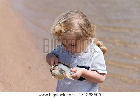 discovery and underwater. cute baby boy small little child with blond hair with seashell or marine shell on beach at sea shore with crystal clear water on sunny on sandy background. summer vacation