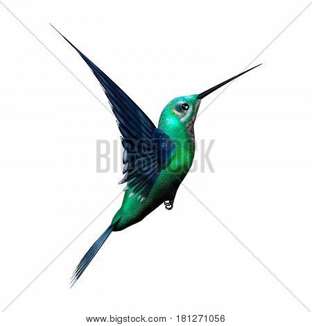 3D Rendering Humming Bird On White