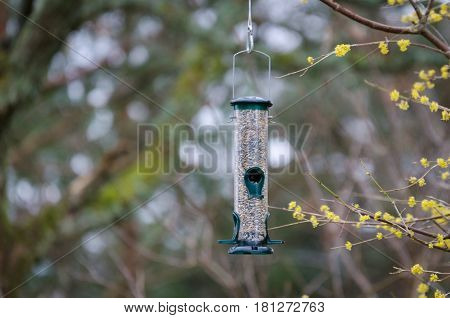 one bird feeder in the tree with food for the bird