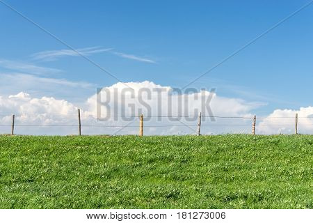 Green grassy meadow on a clear day with blue sky, white clouds and a barbewire fence. Separation of two farmlands.