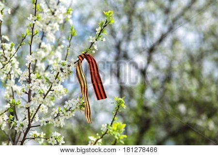 St. George's ribbon on a blossoming branch, victory day 9th May