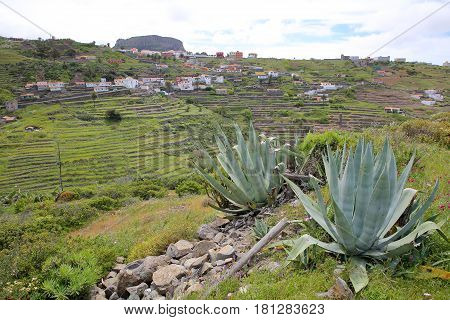 CHIPUDE, LA GOMERA, SPAIN: General view of the terraced fields of Chipude  with Fortaleza mountain in the background and Aloe Vera plants in the foreground