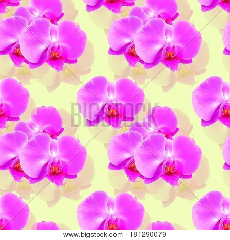Orchid Phalaenopsis. Texture of flowers. Seamless pattern for continuous replicate. Floral background photo collage for production of textile cotton fabric. For use in wallpaper covers.