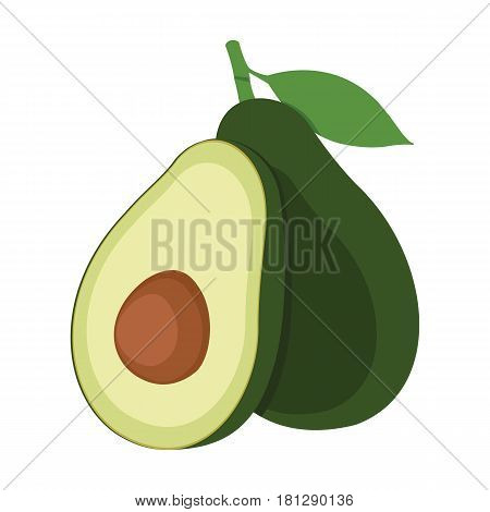 Avocado. One and a half green avocado fruit. Vector illustration.