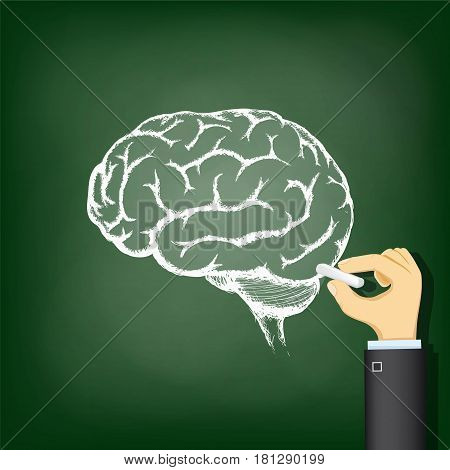 Hand drawing a chalk human brain. Stock vector illustration.