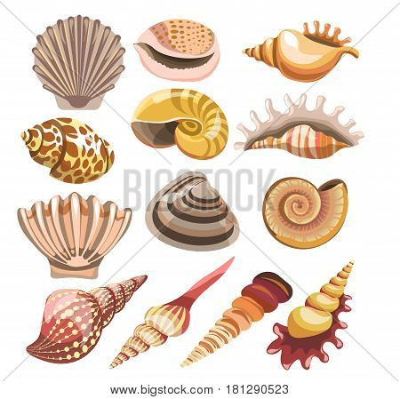 Shells or seashells of different shapes from sea and ocean mollusks. Vector isolated icons