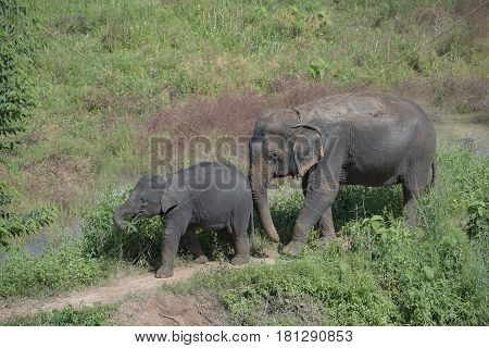 elephant mother and baby on a nature with sunset background.