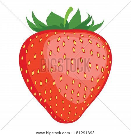 Strawberry. Strawberry fruit close up. Strawberry with leaves isolated on white background. Red berry strawberry. Vector illustration.