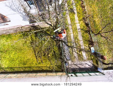 Lumberjack with chainsaw and harness pruning a tree. Arborist cuting tree branches. High angle view.