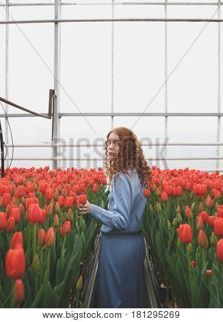 Girl walking in spacious orangery near red tulips