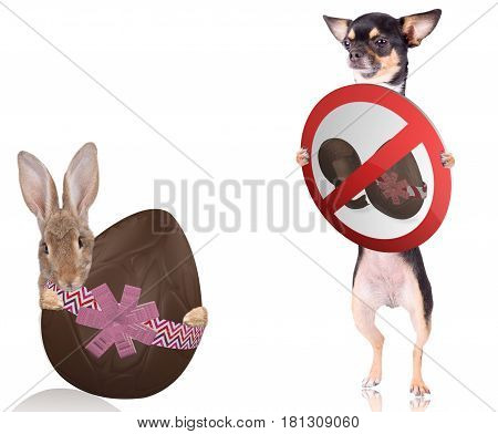 Cute bunny have a large easter egg chocolate between the legs with cute chihuahua dog have a sign board between legs