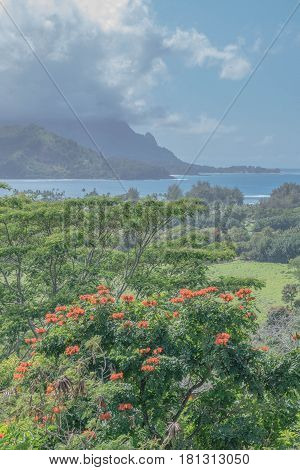 Lush Hanalei: lush landscape with orange flowering tree, Hanalei Bay and mountains, on a cloudy day, on Kauai