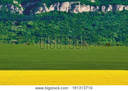 Barley and Rapeseed Field in front of Hill