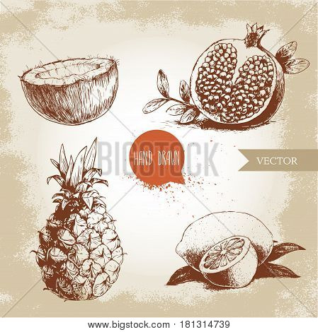 Hand drawn sketch style tropical fruits set. Slice of lemon with leaf half of coconut pineapple and half of pomegranate. Vintage eco food illustration.