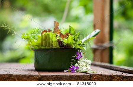 Fresh lettuce in rustic cup on a wooden background. Focus on bellflower
