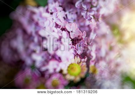 Extreme close-up of Syringa lilac flower touched by sun flare