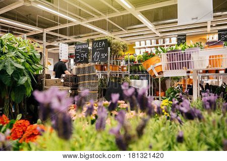 PARIS FRANCE - APR 10 2017: Man buying flowers for garden inside IKEA the Swedish DIY-store chain offering home improvement and do-it-yourself goods - customers buying goods selecting the best tools furniture