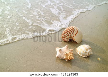 Three types of natural seashells on the beach with the swash, Thailand