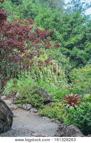 Lush Paradise: stone walking path surrounded by lush vegetation, at the Limahuli Garden and Preserve-National Botanical Garden, Ha'ena, Halele'a, Kauai, Hawaii, on March 24, 2017, mid-morning