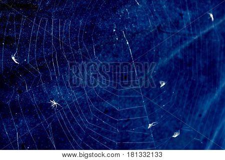 Spider's Cobweb With Flies In Dark Blue Background