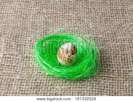 one quail egg rests on the filler sisal lime green color on a wooden table covered with burlap