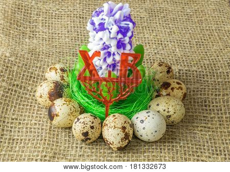 the flower hyacinth is lying on the filler sisal green light green color surrounded by quail eggs on a wooden table covered with burlap