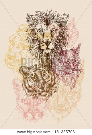 Collection of different cats. Lion, tiger, cat, lynx, cheetah, leopard panther Drawing by hand Sketch style