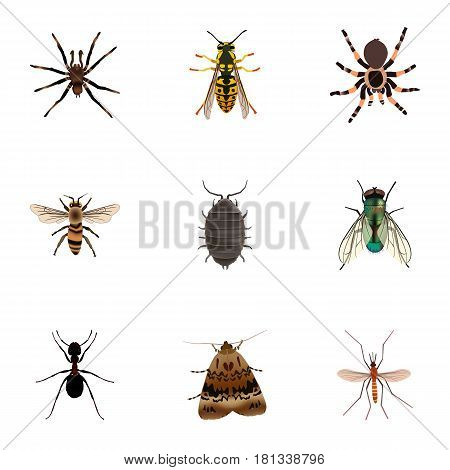 Realistic Ant, Butterfly, Arachnid And Other Vector Elements. Set Of Bug Realistic Symbols Also Includes Jewel, Wisp, Arachnid Objects.