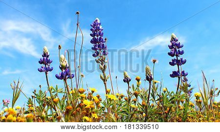 Beautiful spring wild flowers reaching for the sun against a blue sky.