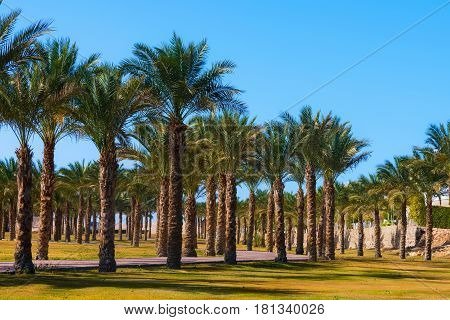 Summer vacation in paradise traveling. Idyllic tropical palm trees garden green oasis resort park with path on bright sunny day on blue sky background