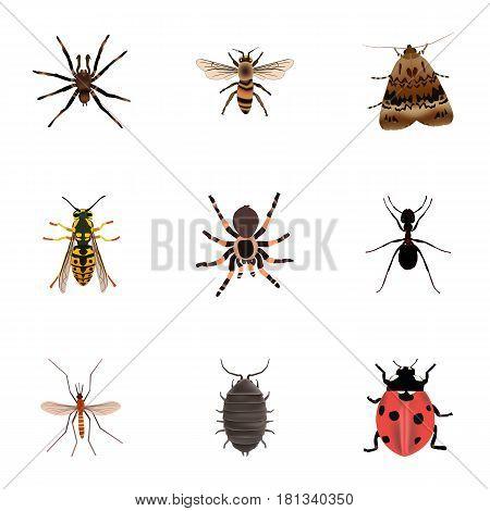 Realistic Wisp, Arachnid, Dor And Other Vector Elements. Set Of Bug Realistic Symbols Also Includes Tarantula, Ant, Pismire Objects.