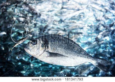 Small fish takes the bait to lure while a big fish watching