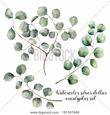 Watercolor set with silver dollar eucalyptus. Hand painted floral illustration with round leaves and branches isolated on white background. For design, print and fabric.