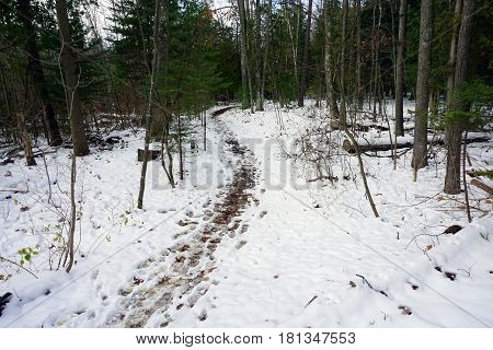 Footprints are left in the snow on a trail through the Richard H. and Lydia Naas Raunecker Preserve in Harbor Springs, Michigan during November.