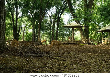 Deer's cage with trees and gazebo inside the cage photo taken in Ragunan zoo Jakarta Indonesia java