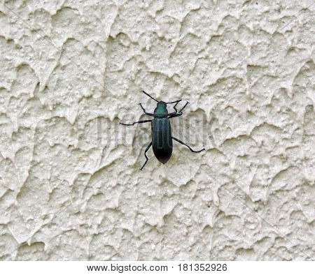 A small black beetle on a rough wall