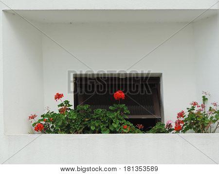 A small garden in the building's balcony